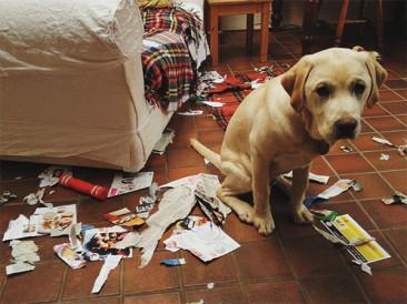 7 непослушни кучета, които ще ви накарат да се посмеете от сърце
